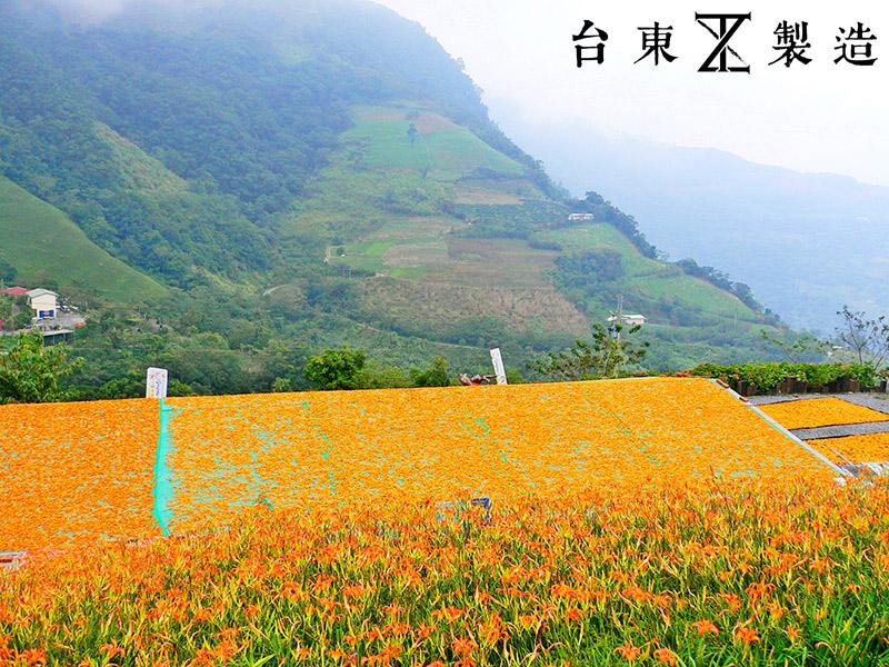 2016金針花季14-花蓮赤柯山