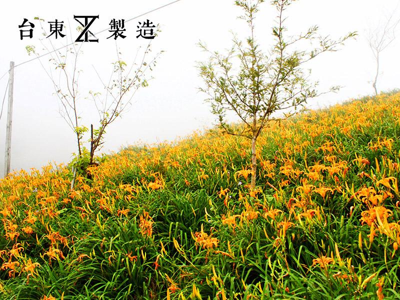 2016金針花季8-台東金針山